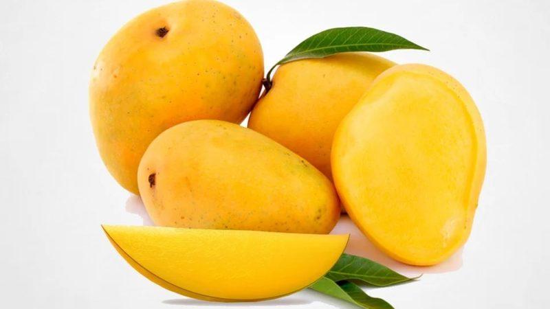 obey king mango kannada story