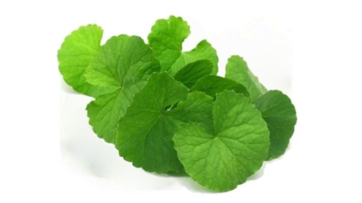 ಒಂದೆಲಗ ಗಿಡ ondelaga brahmi plant